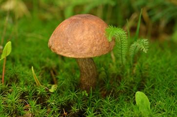 Photos, illustrations et vidéos de mycélium.