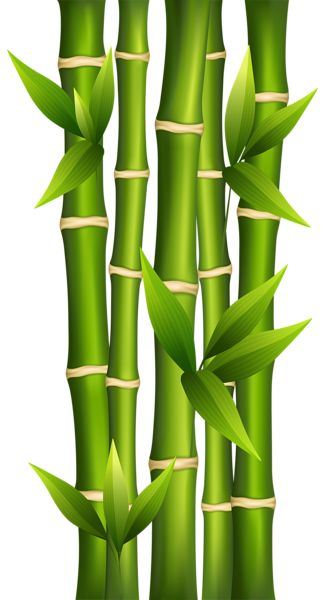 25+ best Chinese Bamboo Tree trending ideas on Pinterest.