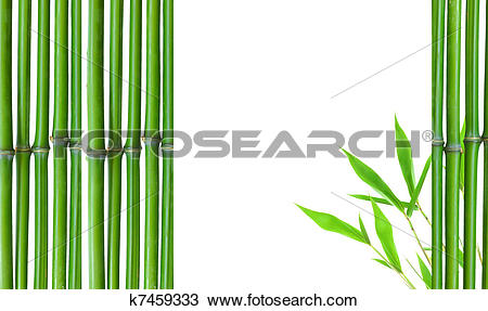 Stock Photo of Border of Green small bamboo k7459333.