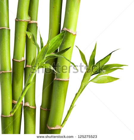 Fresh Bamboo Isolated On White Background Stock Photo 107210384.