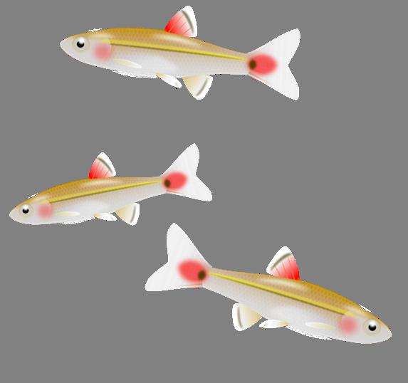 Tiny Fish Clipart.