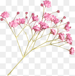 Small Flower Png & Free Small Flower.png Transparent Images.