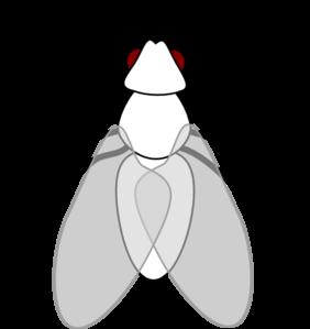 Fly Clip Art at Clker.com.