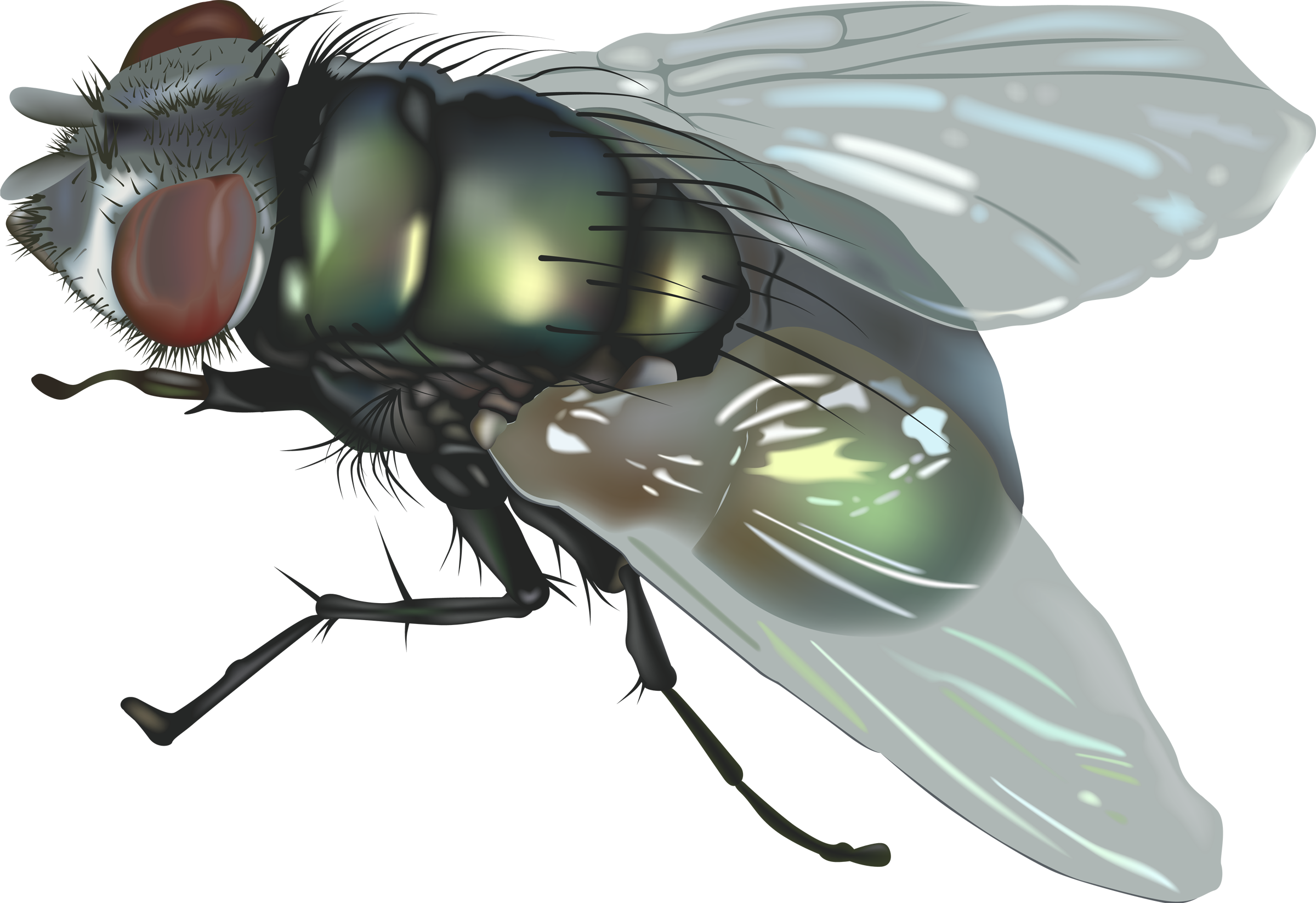 How to Get Rid of Tiny Fly at Your Home.