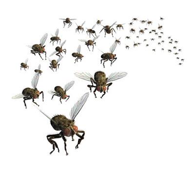 Tiny Flies Clipart.