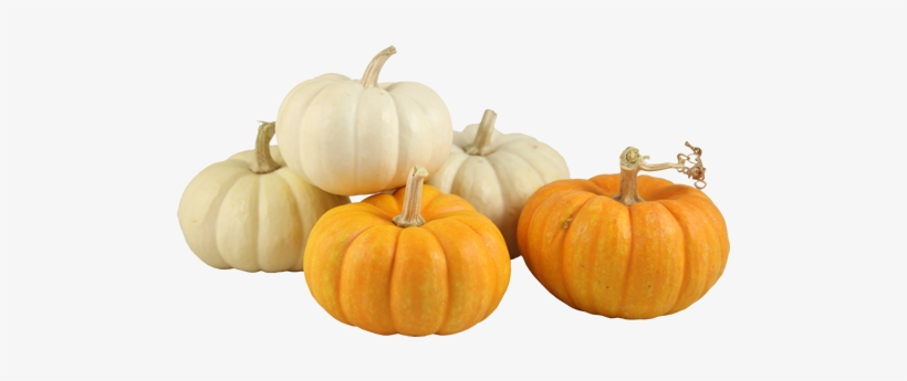 Gourd Small Pumpkin Clipart Royalty Free Library.