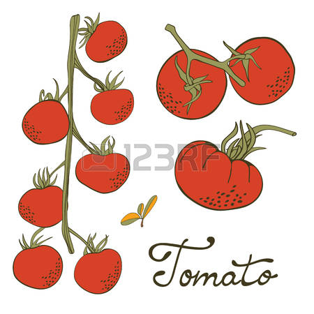 tion clipart #13