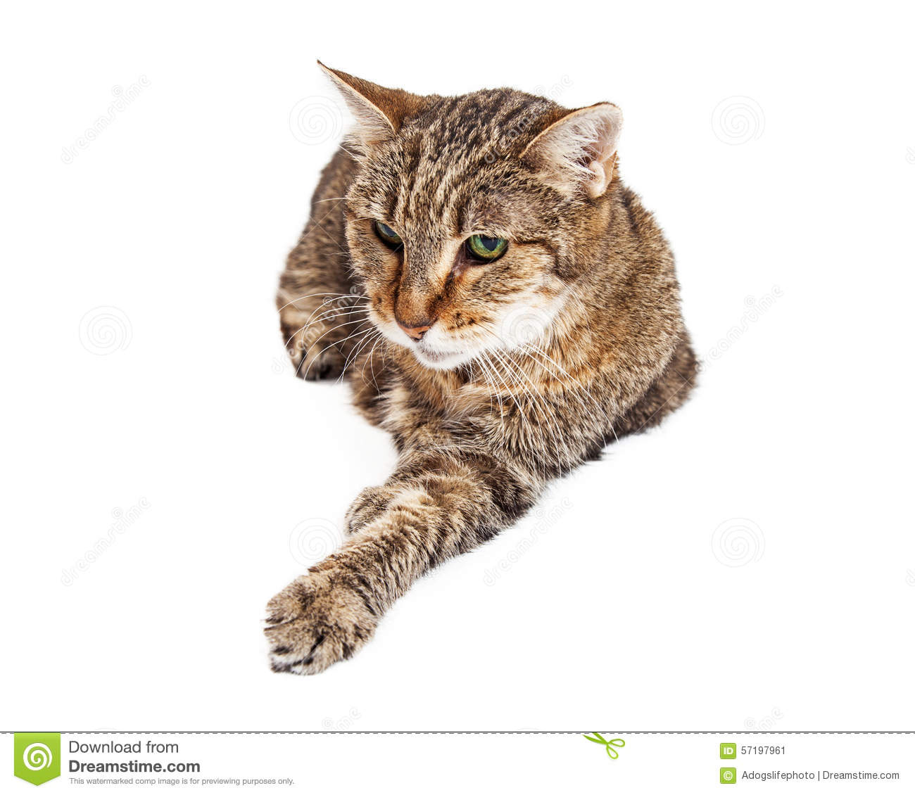 Old And Tired Tabby Cat Laying Stock Photo.