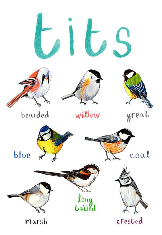 Tit nest clipart #13