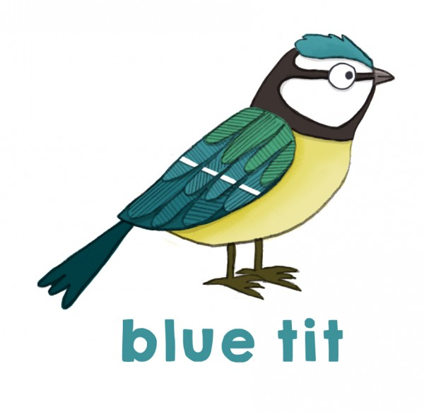 blue tit drawing.