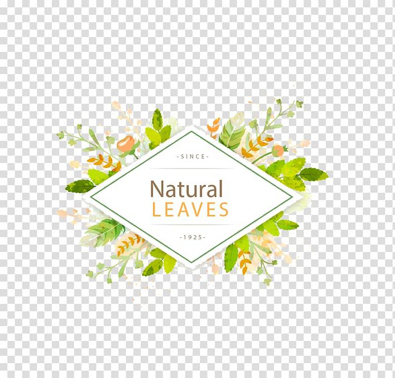 Natura leaves log o, Leaf Euclidean , green leaf frame title.