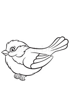 Bird a titmouse.