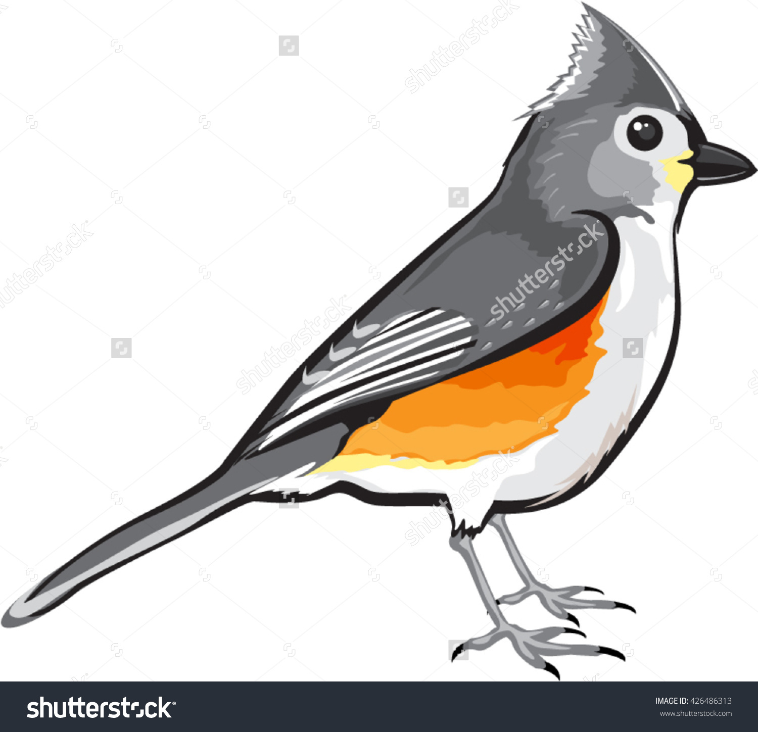 Tufted Titmouse Clip Art.
