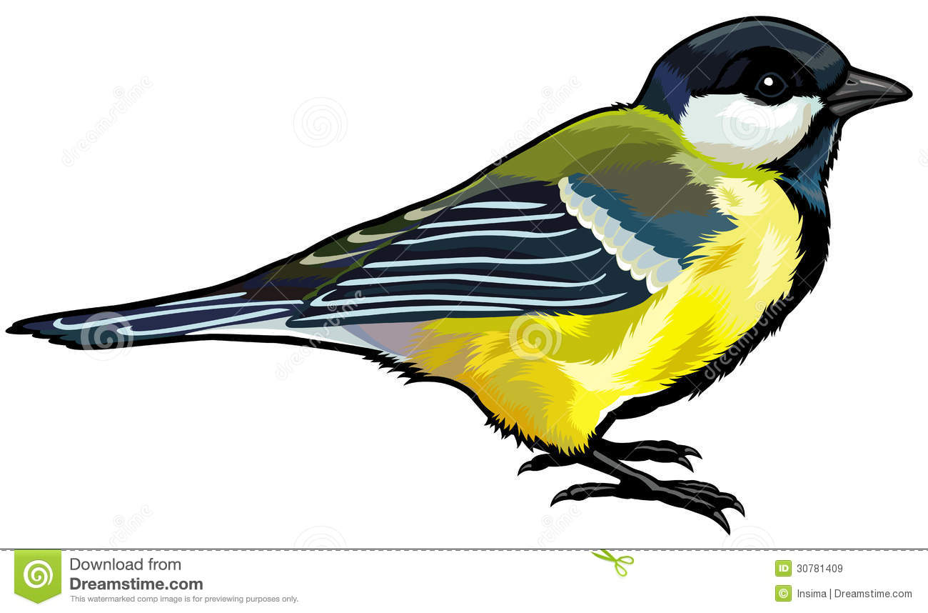Titmouse Stock Illustrations.