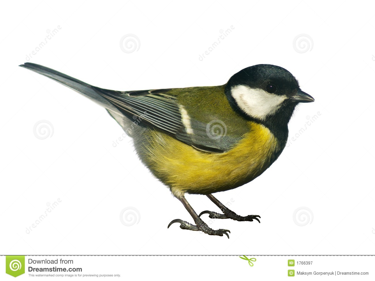 Titmouse Bird, Isolated On White Royalty Free Stock Photography.