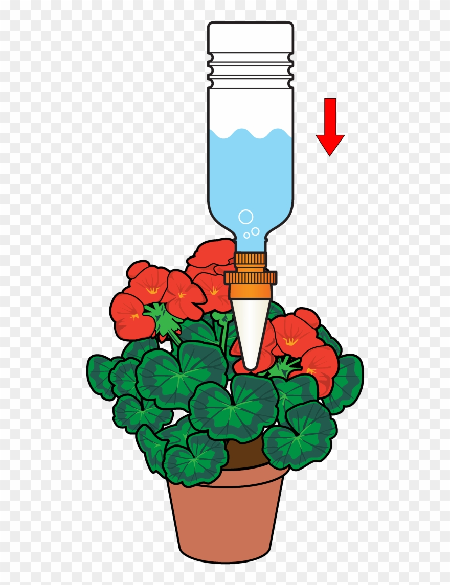 Insert The Cone Into The Plant Pot To Allow A Slow.