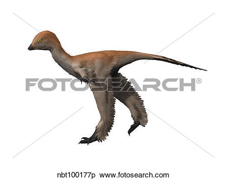 Stock Illustration of Mei long is a troodontid from the Cretaceous.