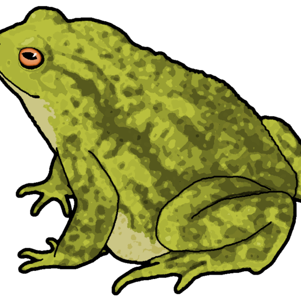Toad clipart real frog, Toad real frog Transparent FREE for.