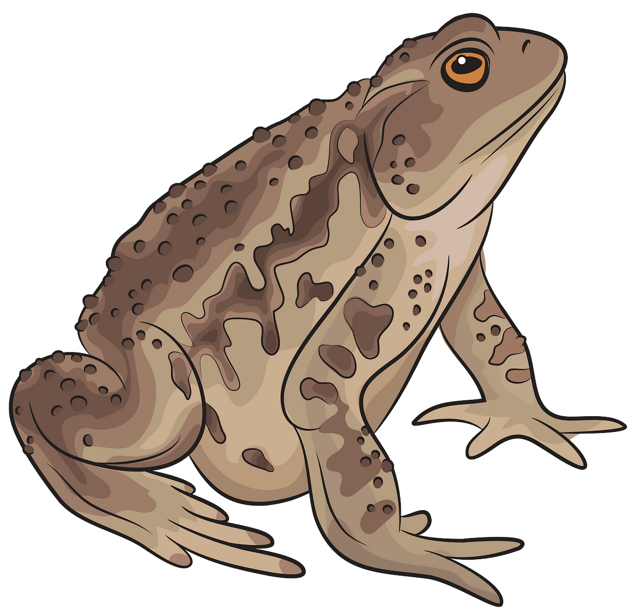 Asiatic Toad clipart. Free download..