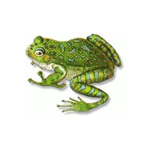 Florida tree frog clip art, public domain image.