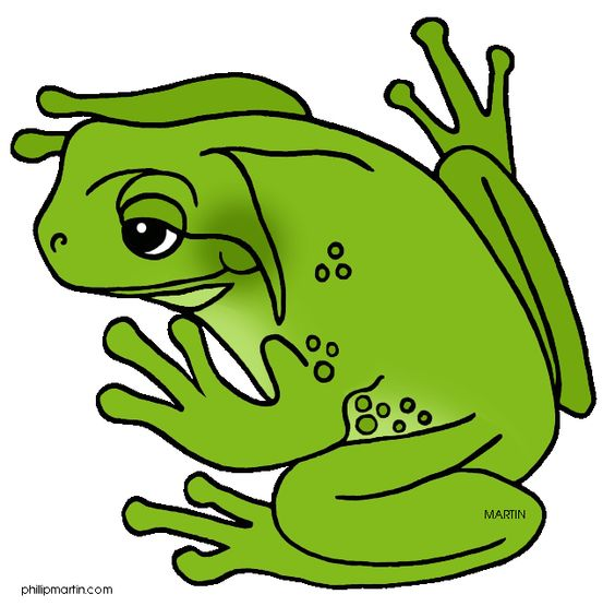 ♥ Frog ♥.
