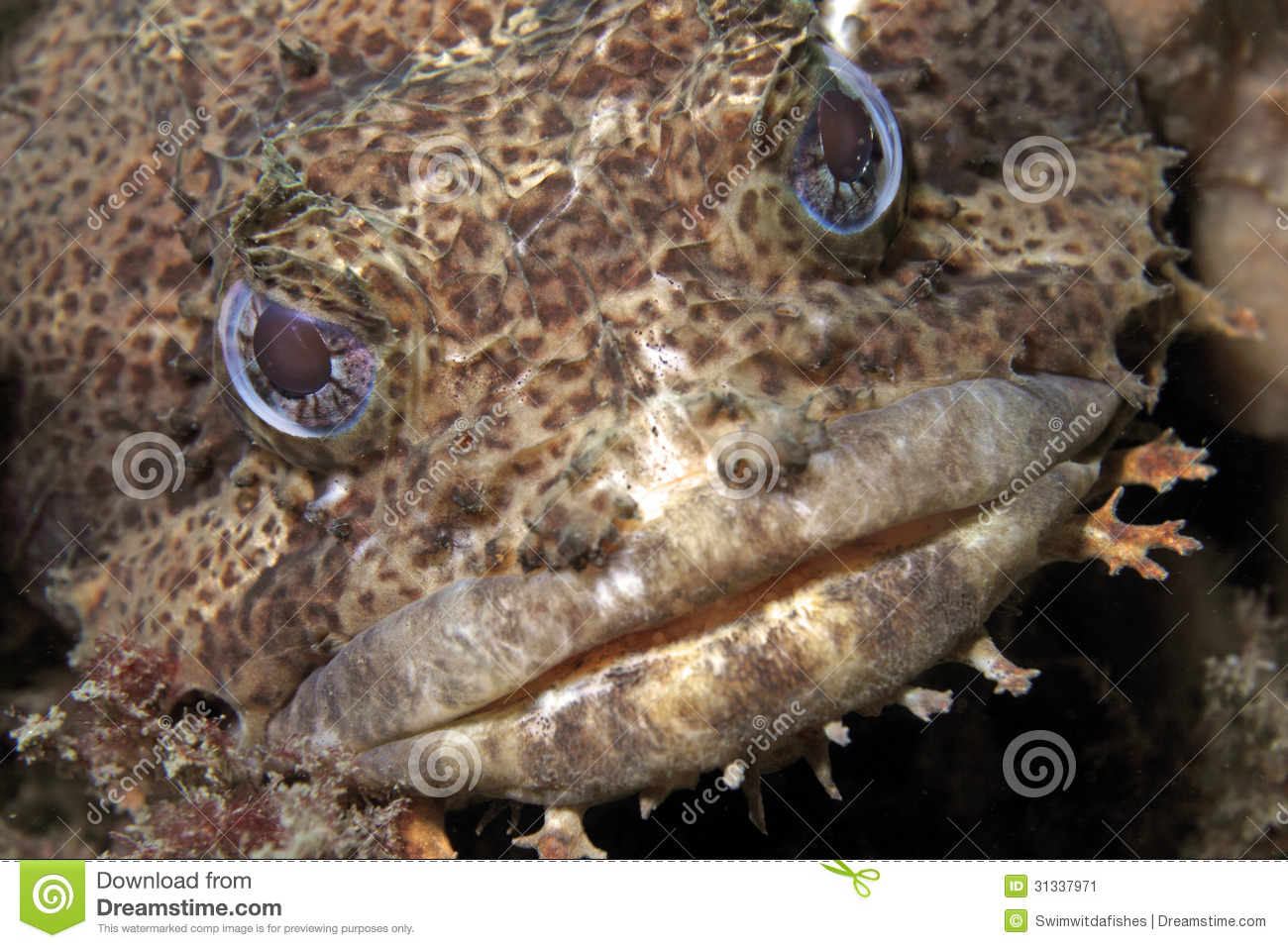 Oyster Toad Fish Clipart.