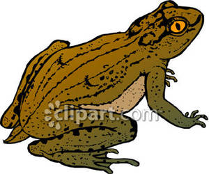 Toad With Yellow Eyes.