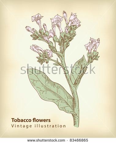Tobacco Farm Stock Vectors & Vector Clip Art.