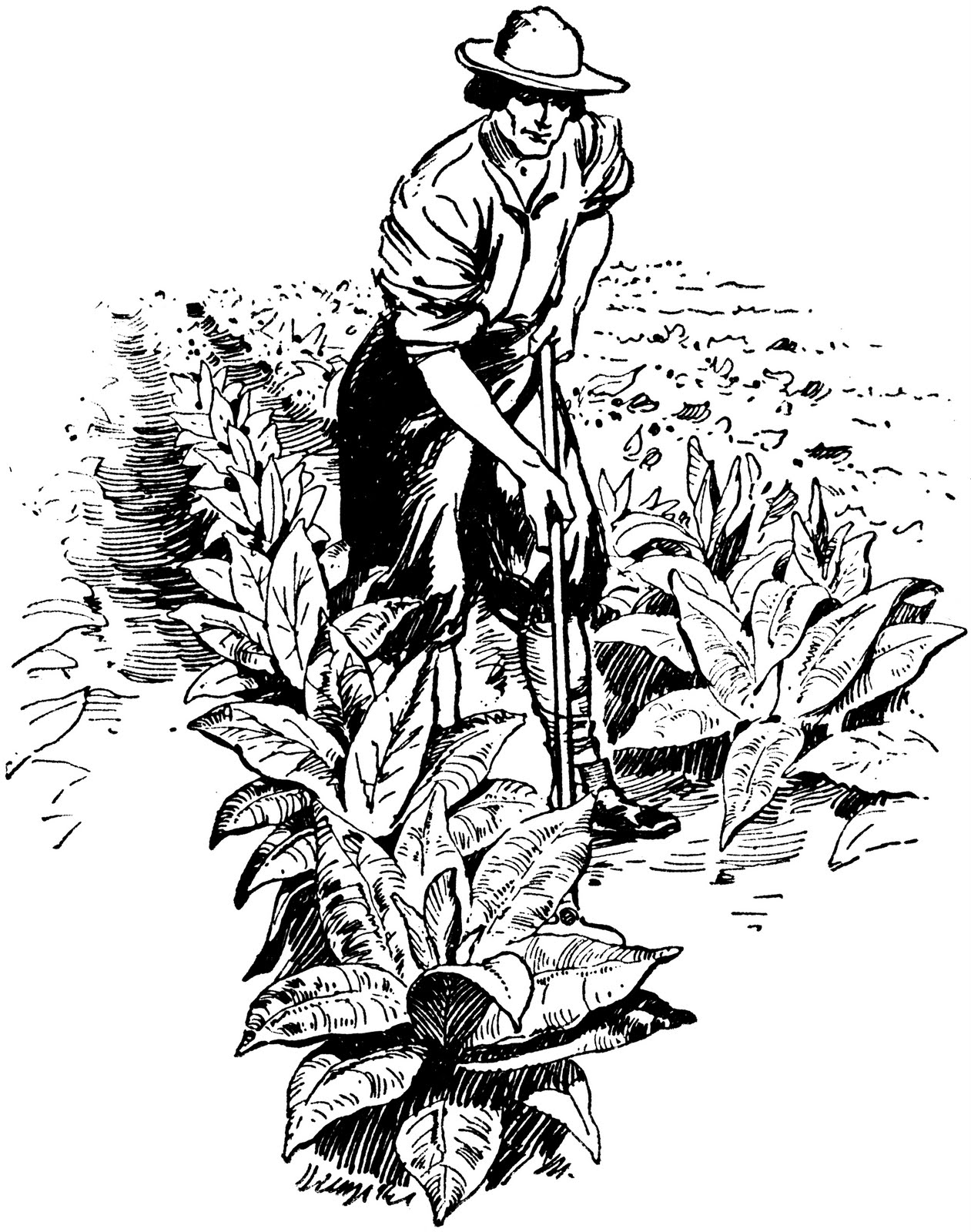 Showing post & media for Cartoon tobacco crops.