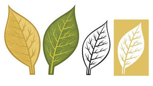 Tobacco Leaf Clipart Leaves Nw.