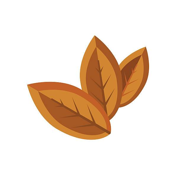 Tobacco leaf clipart 3 » Clipart Portal.