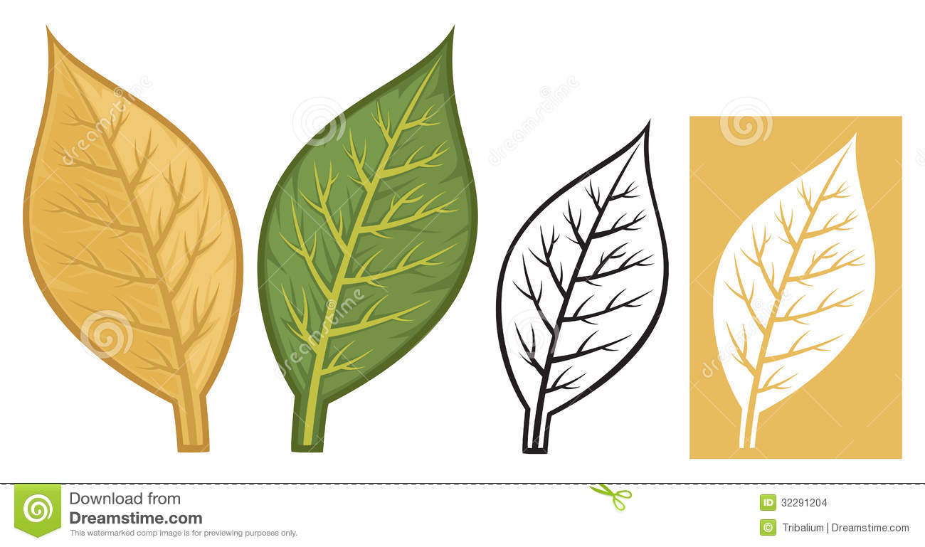 Tobacco leaves clipart.