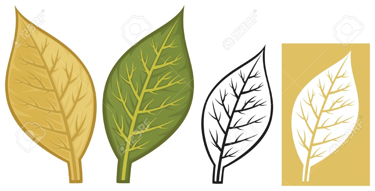 1,099 Tobacco Leaf Stock Illustrations, Cliparts And Royalty Free.