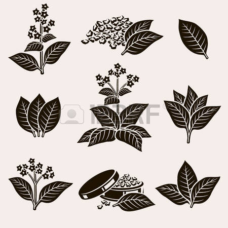 1,007 Tobacco Leaf Stock Illustrations, Cliparts And Royalty Free.