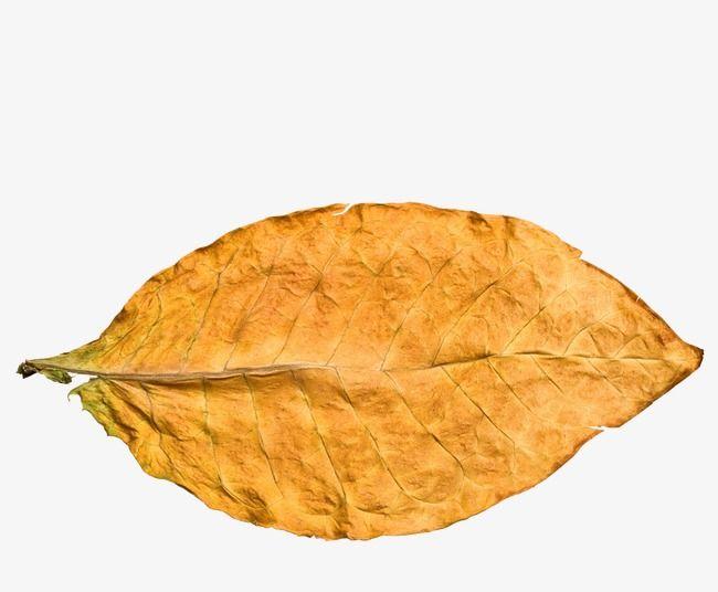 Leaf, Tobacco Leaf, Tobacco, Yellow Leaves PNG Transparent.