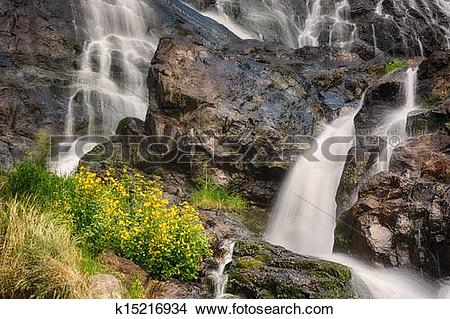 Stock Photo of Todtnauer Waterfalls with yellow flowers, Black.