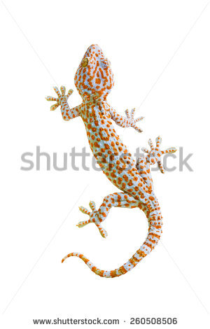 Gecko Stock Photos, Royalty.