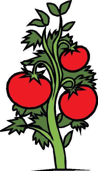 Tomato Plant clip art Free Vector.