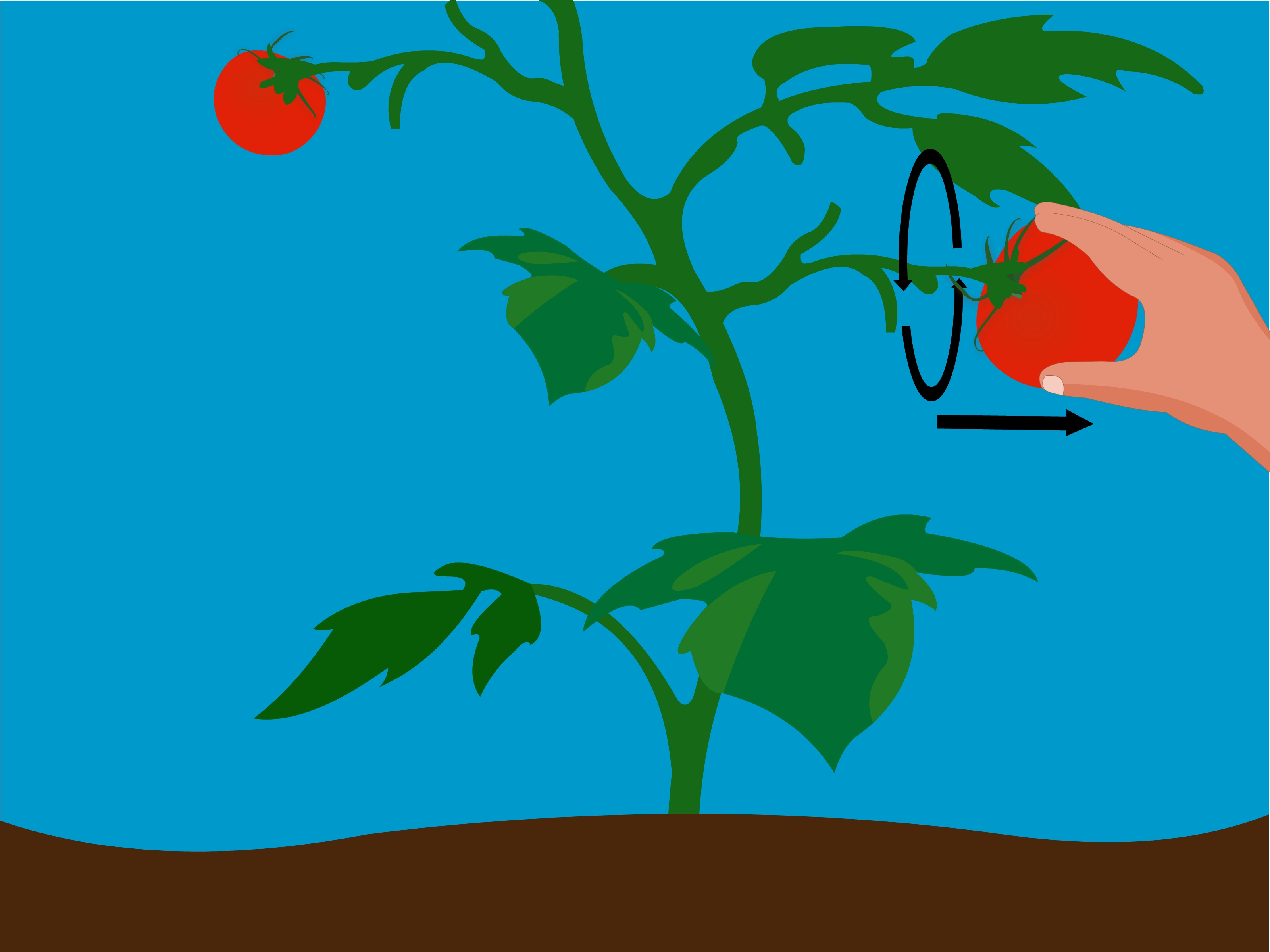 4 Ways to Grow Tomatoes from Seeds.