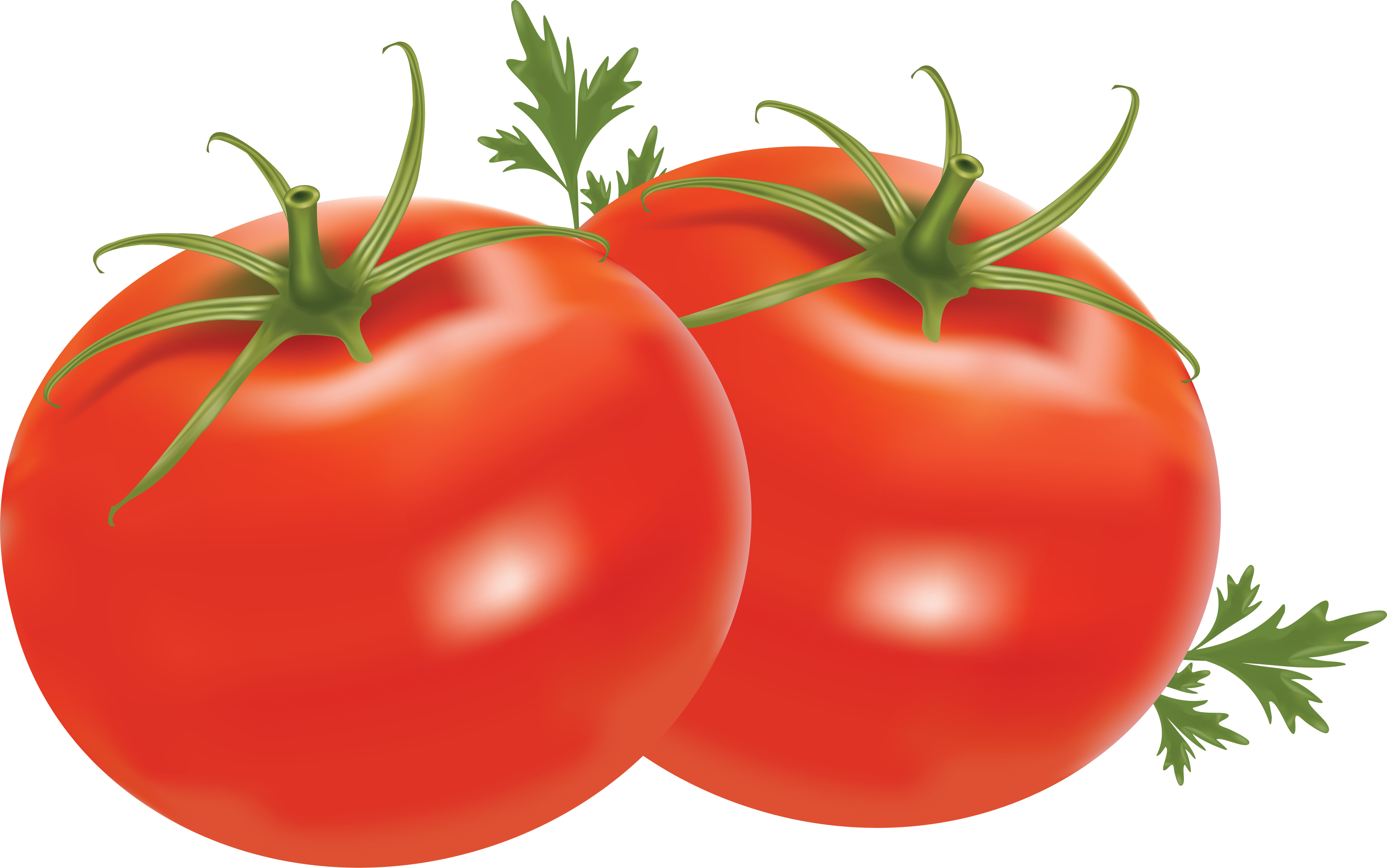 tomato clipart no backround #16