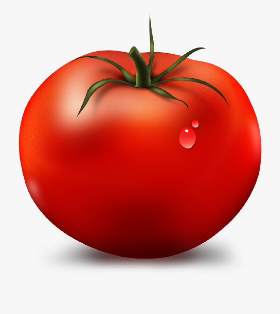 Tomato Clipart Bird Clipart Hatenylo.
