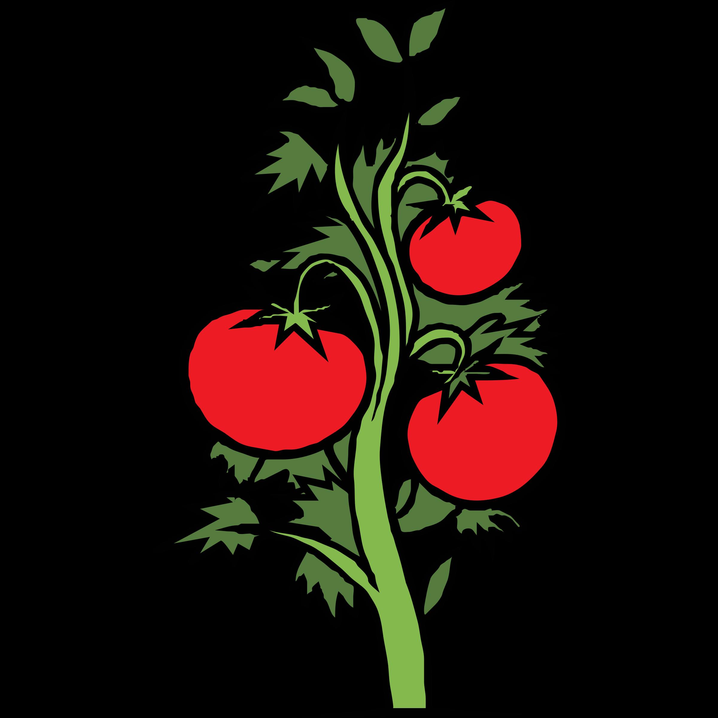 Tomato Plant Clip Art Clipartfest Cliparting.