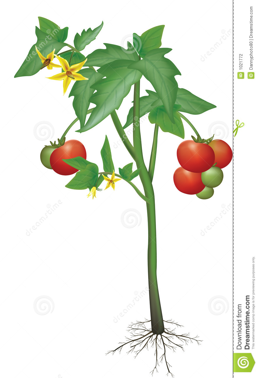 Red Tomato Plant Clipart Clipart Suggest.