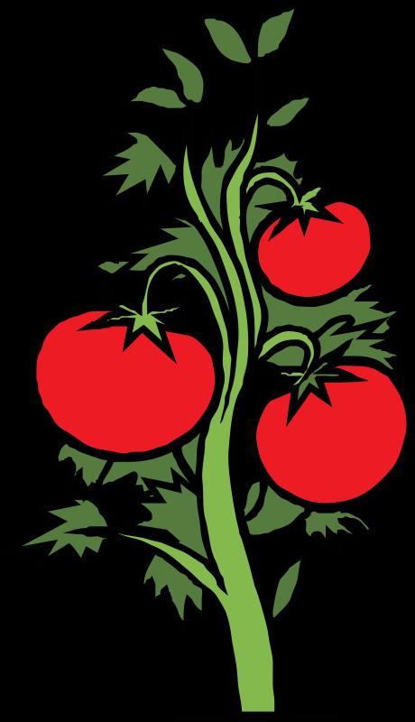Free Clipart: Tomato plant.