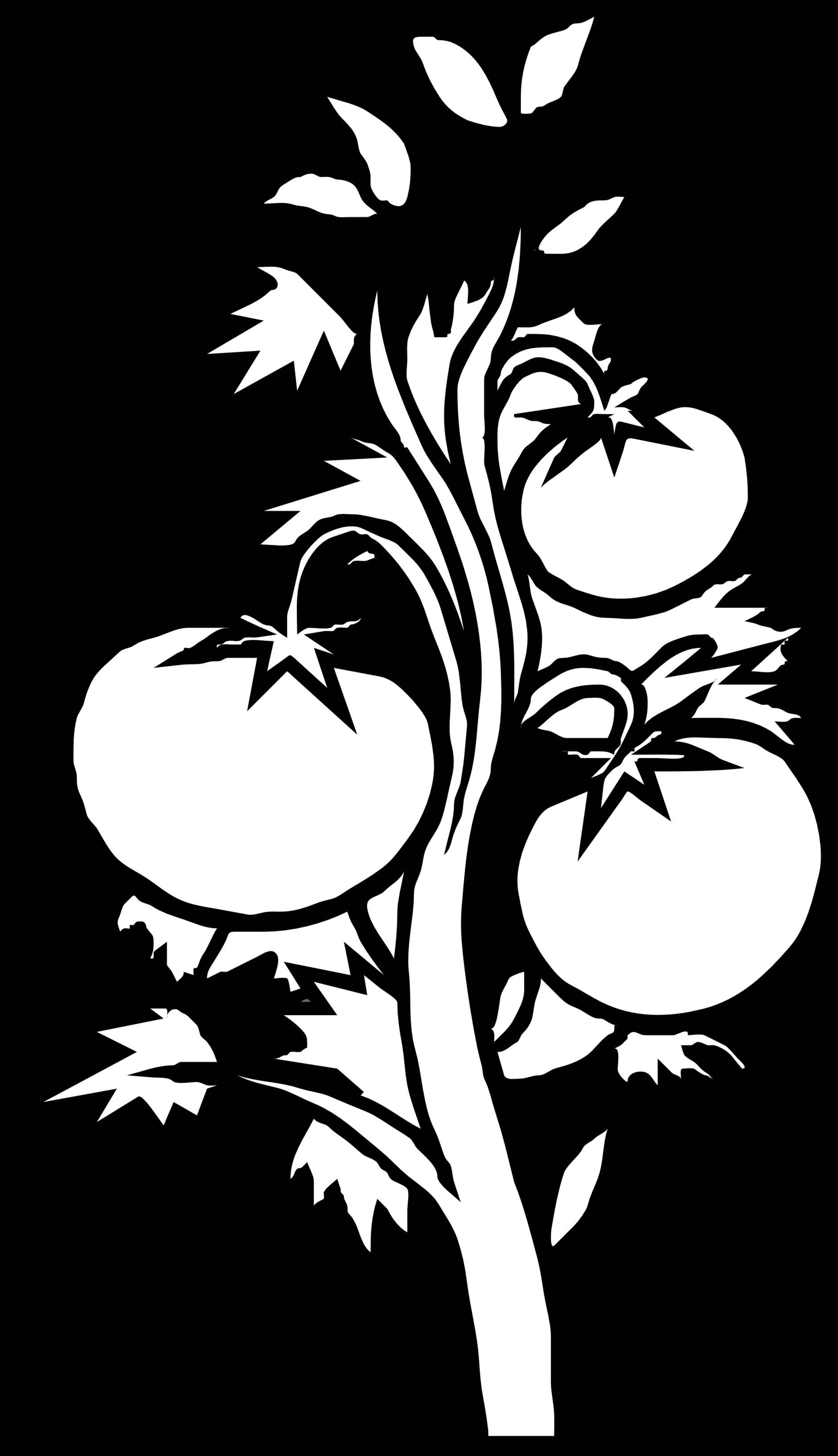 Tomato Plant Clip Art Clipart.