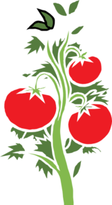 Tomato Plant Clip Art at Clker.com.