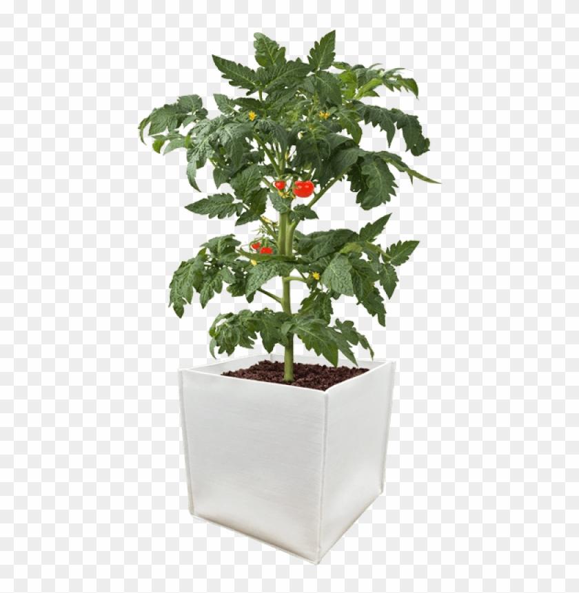 Durapot Grow Pot.
