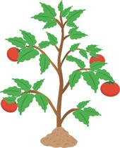 Free Plants Clipart.