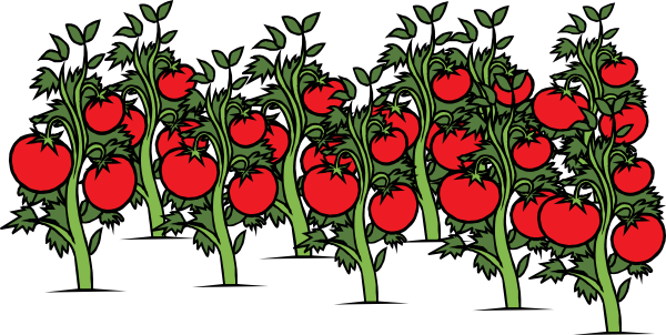 Tomato Shrub Clipart 20 Free Cliparts Download Images On