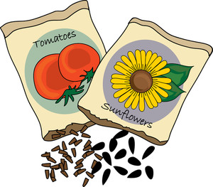 Clip Art Tomato Seeds Clipart.